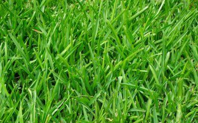Come eliminare le macchie d'erba